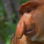 sadnose.monkey