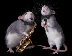 rat park fun